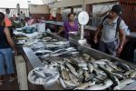 Cabo Verde - fish all over