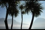 Ticino - palm quartet
