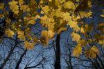 Pura - autumn