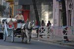 Buenos Aires - patient horse
