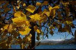Ticino - autumn in Caslano