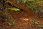 autumn in Ticino - green left