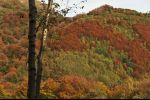 autumn in Ticino - decisive