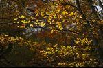 autumn in Ticino - pearls
